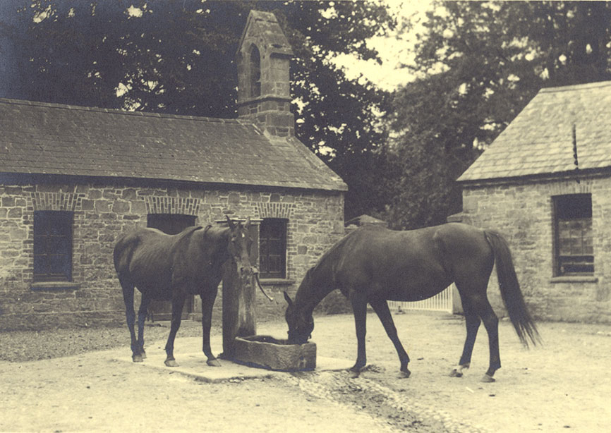 Horses at Moyaliffe