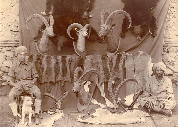 A display of hunting trophies in Kashmir, c. 1911