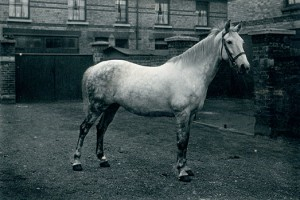 Pat Armstrong's polo pony, Silverwings