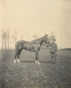 A cavalry horse