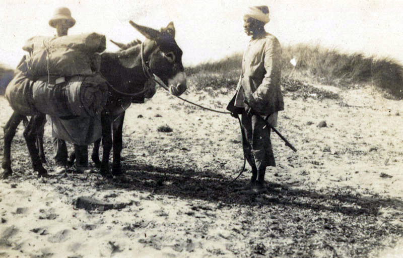 Donkeys in Gallipoli