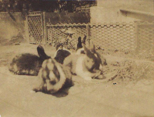 Ione's rabbits