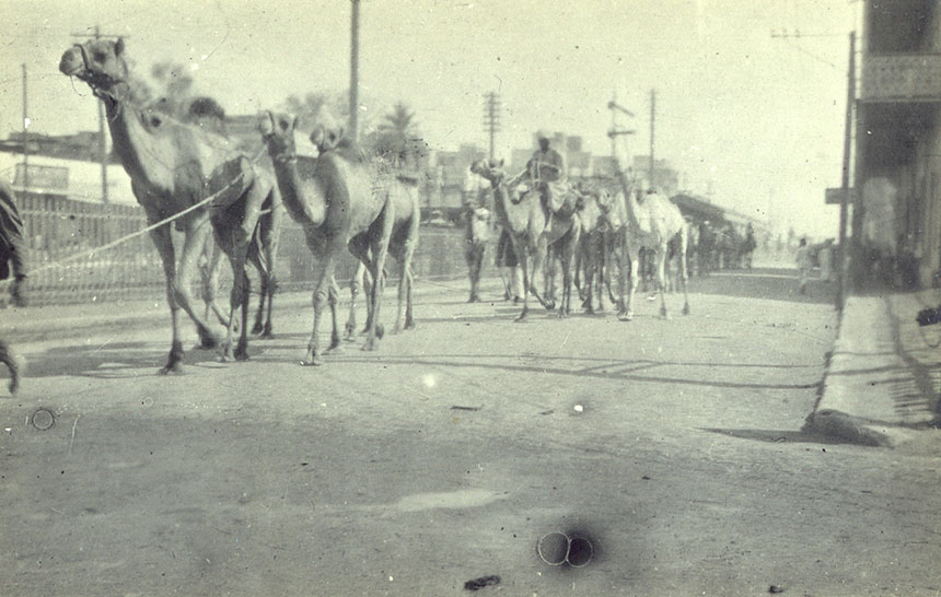 A camel caravan in Egypt