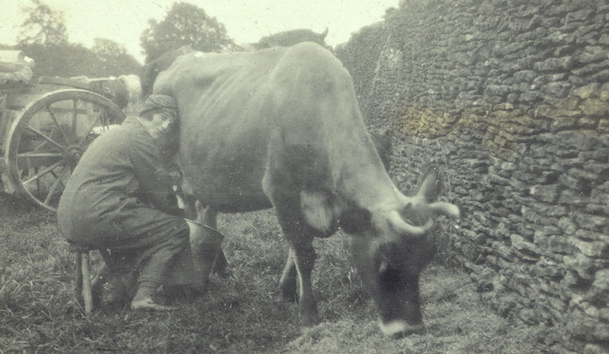Ione milking a cow